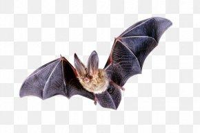 Bat Clipart - Bat Flight Clip Art PNG