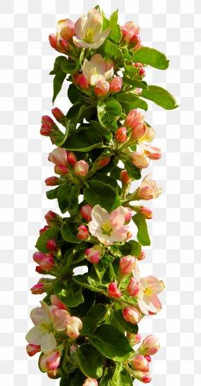 Spring Flower - Flower PNG