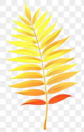 Vascular Plant Flower - Watercolor Flower Background PNG