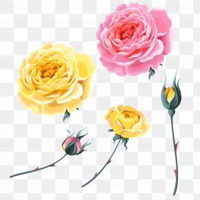 Rose,Pink Roses,Yellow Rose,Bud - Garden Roses Beach Rose Yellow PNG