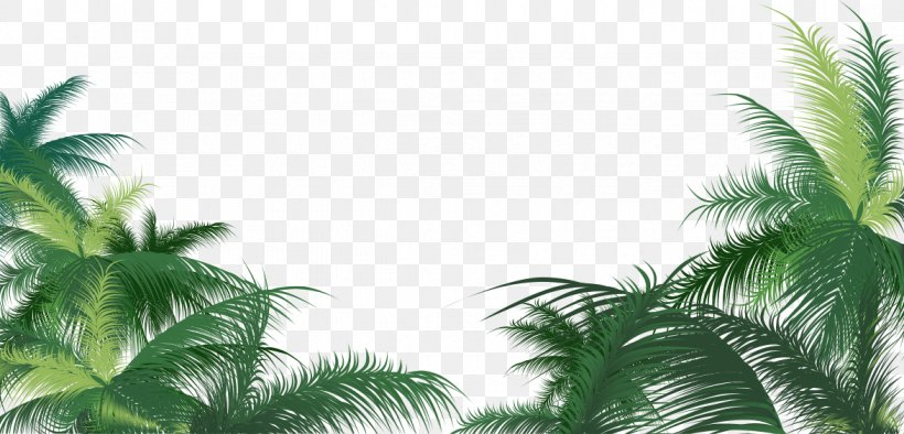 Green Palm Leaves Background, PNG, 1173x565px, Arecaceae, Areca Palm, Arecales, Coconut, Grass Download Free