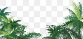 Palm Leaves PNG - Green Palm Leaves Background PNG