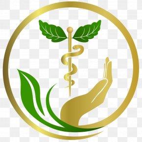 Emblem Plant - Green Leaf Logo PNG