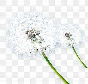 Dandelion Creative - Dandelion Musical Note Taraxacum Coreanum PNG