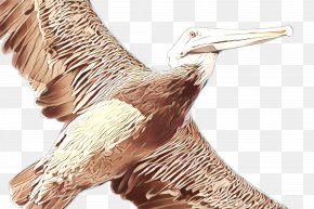 Wildlife Heron - Bird Pelican Beak White Pelican Seabird PNG