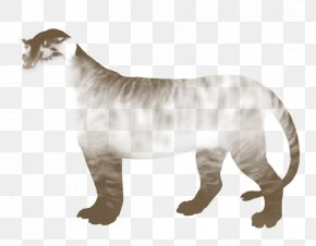 Tiger - Tiger Big Cat Lion Felidae PNG