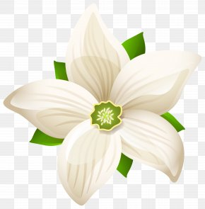 Large White Flower Transparent Clip Art Image - Black And White Flower PNG