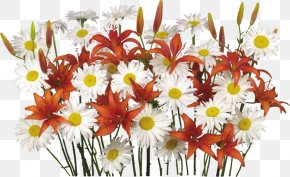 Chamomile Bouquet - Easter Holiday Resurrection Of Jesus Paschal Greeting New Year PNG