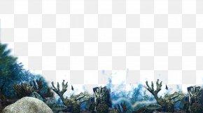 Coral - Wallpaper PNG