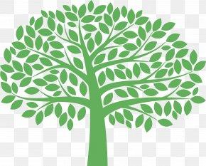 Plant Stem Woody Plant - Green Leaf Tree Plant Woody Plant PNG