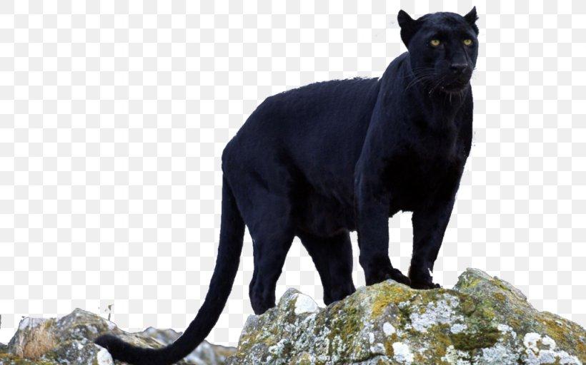 Converse Black Cougar