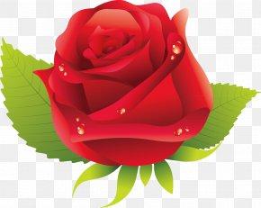 Rose Vector - Garden Roses Rosa Chinensis Centifolia Roses Floribunda Flower PNG