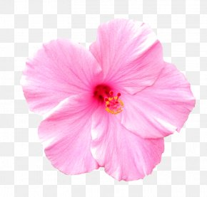Pink Flower - Pink Flowers Rose Clip Art PNG