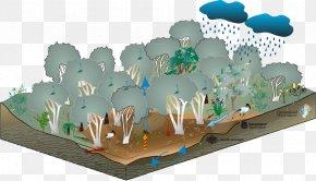 Eucalyptus - Swamp Wetland Floodplain Melaleuca Gum Trees PNG
