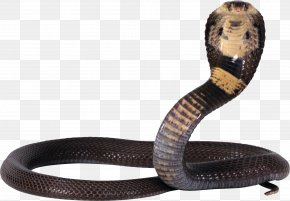 Cobra Snake Image, Free Download Picture - Snake King Cobra Reptile PNG