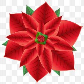 Christmas Poinsettia Transparent Clip Art Image - Poinsettia Christmas Flower Clip Art PNG