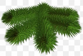 Transparent Pine Branch 3D Picture - Pine Branch Clip Art PNG