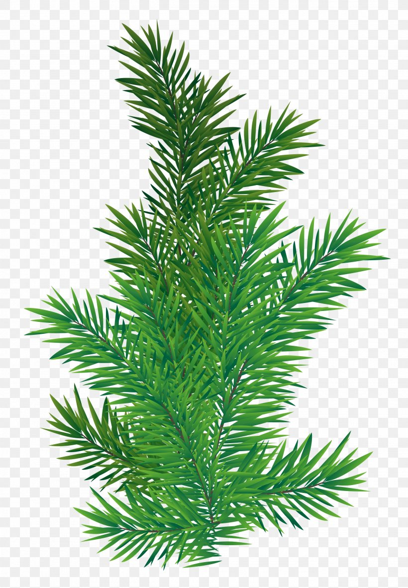 Christmas Branch Png.Tree Branch Scots Pine Png 2695x3886px Fir Branch