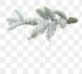 Winter Branches Stock Image - Winter Leaf PNG