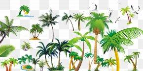 Coconut Tree - Arecaceae Plant Tree Flowerpot Zazzle PNG