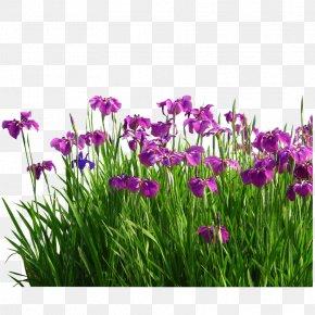 Aquatic Gardens - Flower Sweet Flag Garden Grasses PNG