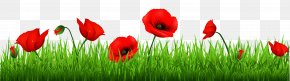 Grass With Beautiful Poppies Clipart - Poppy Flowers Common Poppy Armistice Day Clip Art PNG