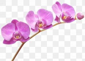 Orchids Transparent PNG Clip Art Image - Lady's Slipper Orchids Flower Clip Art PNG