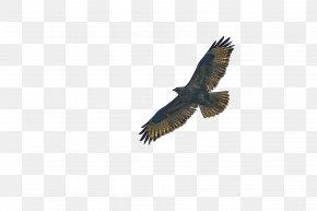 Air Free Eagle - Bald Eagle Statue Of Liberty Bird Hawk PNG