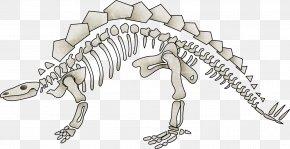 Dinosaur Skeleton - Dinosaur Tyrannosaurus Human Skeleton Bone PNG