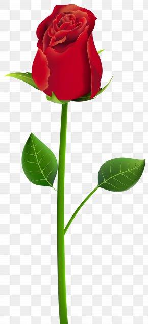 Rose Clip Art Transparent Image - Rose Clip Art PNG