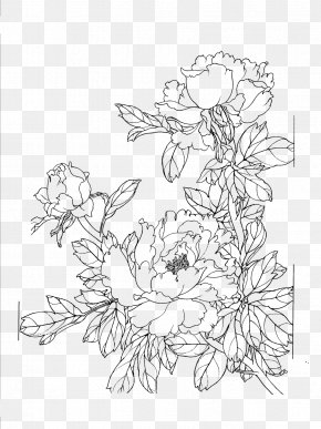 Peony Flower Line Drawing - Drawing PNG