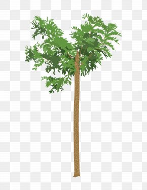 Tree - Tree Drawing Root Leaf PNG