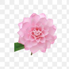 A Solid Triangle Edge Camellia - Japanese Camellia Centifolia Roses Pink Petal PNG