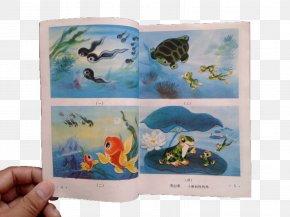 Primary School Textbooks Small Tadpoles Looking For Mom - National Primary School Textbook PNG