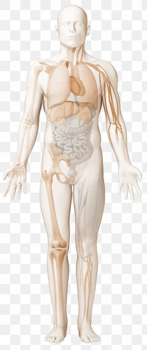 Immune Complex Systemic Lupus Erythematosus Rheumatology Antiphospholipid Syndrome Reactive Arthritis PNG