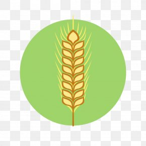 Wheat - Flat Design Icon PNG