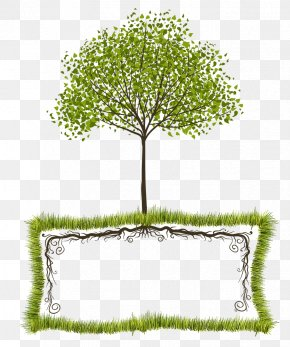 Tree Root - Tree Text Box Clip Art PNG