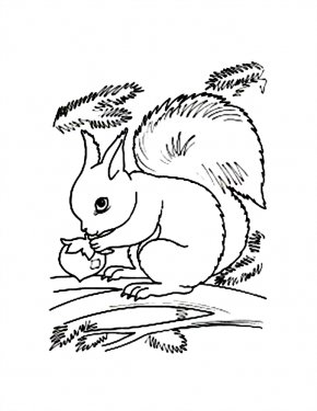 Flying Squirrel Coloring Page - Flying Squirrel Coloring Book Red Squirrel Clip Art PNG