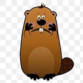 Face Beaver - Beaver Stock Photography Clip Art PNG