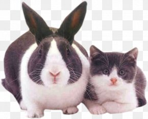 Rabbits And Cats - Scottish Fold Easter Bunny Kitten Dog Puppy PNG