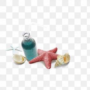 Starfish - Beach PNG
