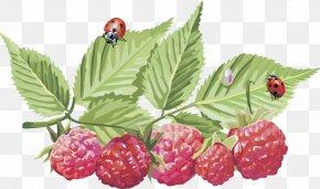 Vector Raspberry - Frutti Di Bosco Red Raspberry Clip Art PNG