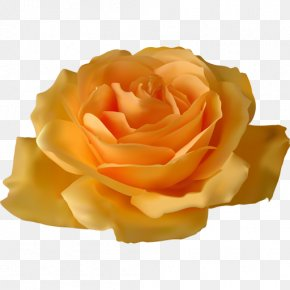 Flower Image - Garden Roses Flower Vector Graphics Clip Art PNG