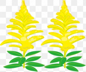 Flower Autumn - Canada Goldenrod Royalty-free Clip Art PNG