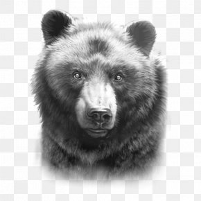 Black Bear Family Drawing - Grizzly Bear American Black Bear Drawing Paper PNG