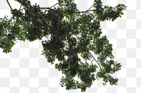 Trees - Leaf Tree Branch PNG
