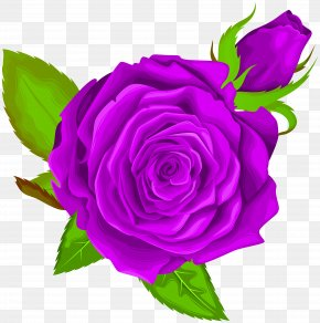 Purple Rose Decorative Clip Art Image - Garden Roses Centifolia Roses Clip Art PNG