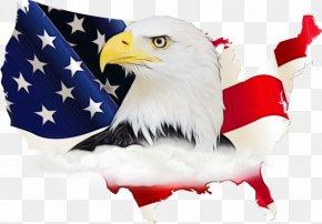 Beak Veterans Day - Veterans Day United States PNG