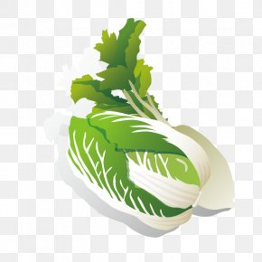 Cabbage Turnip - Leaf Vegetable Chinese Cabbage Radish PNG