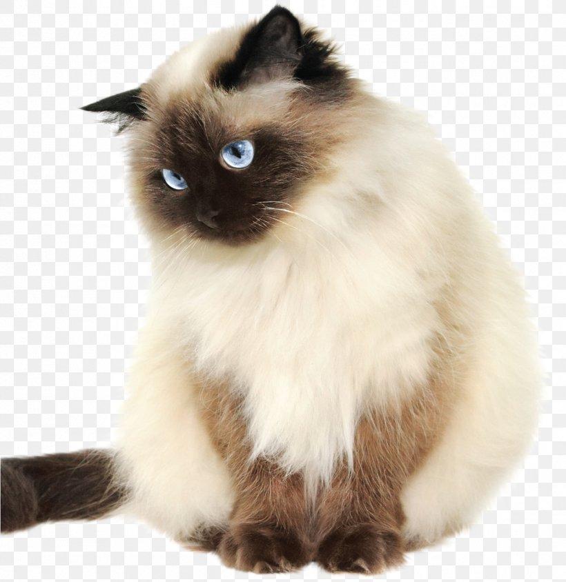 Cat Small To Medium Sized Cats Birman Himalayan Siamese Png 1290x1329px Cat Balinese Birman Himalayan Ragdoll
